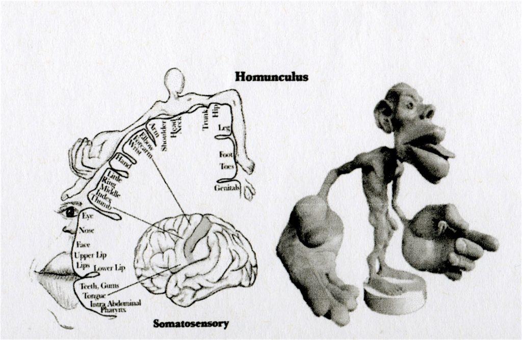 homunuclus